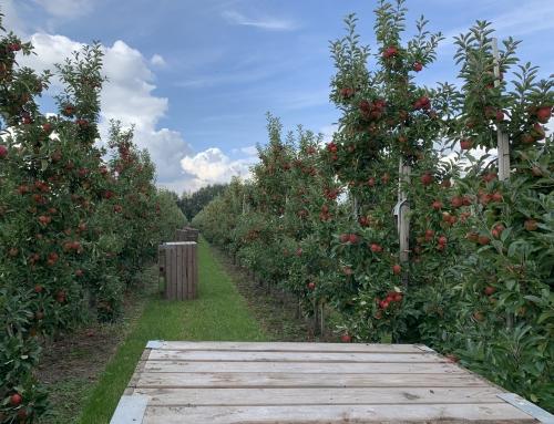Die aufregenste Zeit beginnt! – Erntebeginn 2019 am Obsthof Suhr