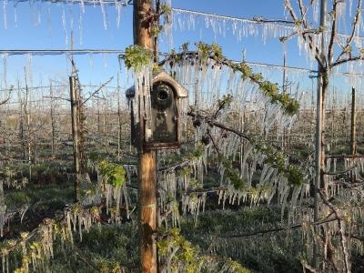 obsthof-suhr-Beregnung-aepfelbluete-frost-april-vogelhaus